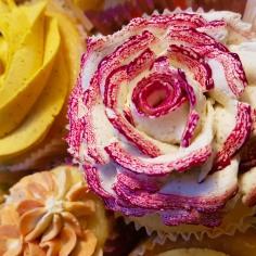 cupcake-straus-083811